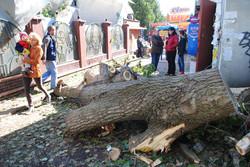 Навіть такі дерева повалило