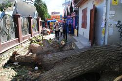 Ці дерева вже порізали. А було ні пройти, ні проїхати