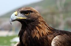 Львівська міліція готова захищати права птахів, але не боротися з наркоторгівлею