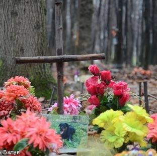 Замість кладовища для тварин  міська влада пропонує львів'янам спалювати домашніх улюбленців