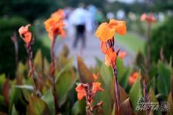 Львівський Ботанічний сад знову відкрив свої двері (ФОТО)