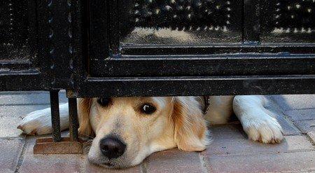 """ЛКП """"Лев"""" шукає кошти на рушницю для собак"""