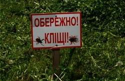Львівські парки почали очищати від кліщів