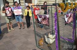 У Львові бойкотували «курей-артисток», які співають на російській сцені (ФОТО)