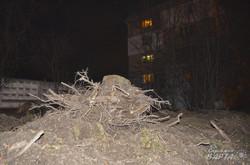 Щоб збудувати автомийку у Львові вирубали сад, - мешканці (ФОТО)