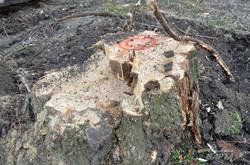У сквері св.Юра замість обіяцних 9 дерев зрізали 16. Активісти заблокували роботу (ФОТО)