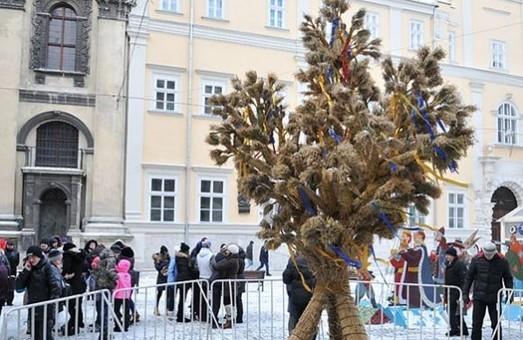 До Різдва у Львові встановлять 3-метрового дідуха