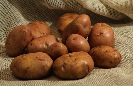 У 83-річного пенсіонера з Львівщини поцупили 200 кг картоплі