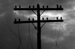 У Львові через негоду численні випадки обриву електропередач