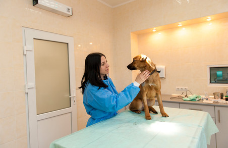 У Львові створюють центр адопції беспритульних тварин