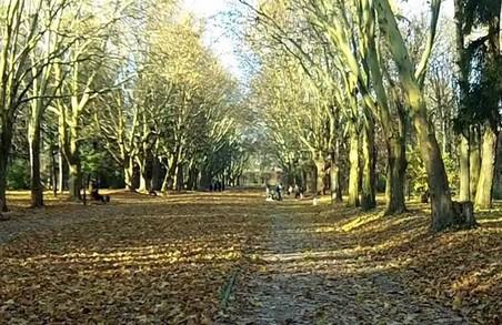 У львівських парках висадили рідкісні дерева