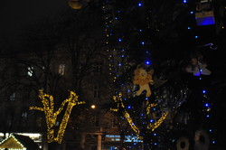 У центрі Львова засяяла вічнозелена красуня (ФОТО)