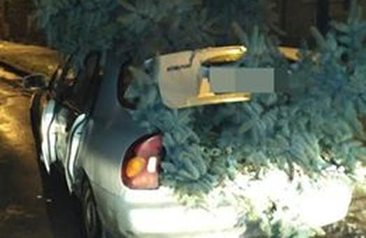 Вічнозелений бізнес: львівські патрульні вилучили у чоловіка ялинки без маркування