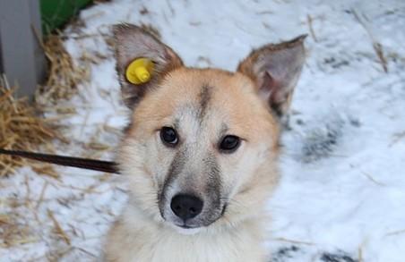 З 1 січня на власників незареєстрованих собак у Львові чекає штраф