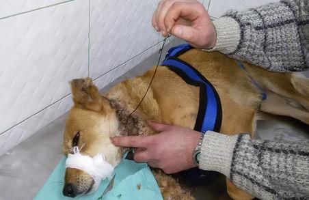 У Львові працюють браконьєри: по місту розставлені пастки на тварин