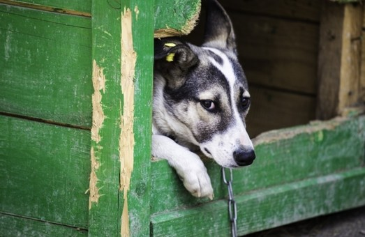ЛКП «Лев» придбає польову кухню для притулку для тварин «Милосердя»