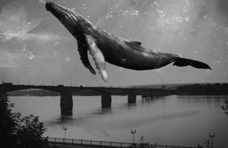 """Мітка """"синього кита"""": в Івано-Франківську медики дивом врятували школярку від суїциду"""