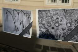 У Львові провели попереджувальну акцію по первоцвітах, на черзі - рейди (ФОТО)