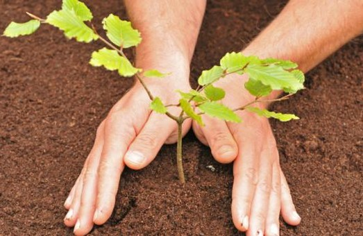 Мешканців Львівщини запрошують долучитися до обласного місячника озеленення