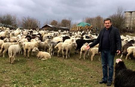 Учасник АТО з Львівщини працює над конкурентною вівцефермою та запрошує побратимів до співпраці