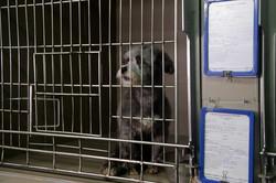 До кінця весни Львів першим в Україні відкриє Центр адопції безпритульних тварин (ФОТО)
