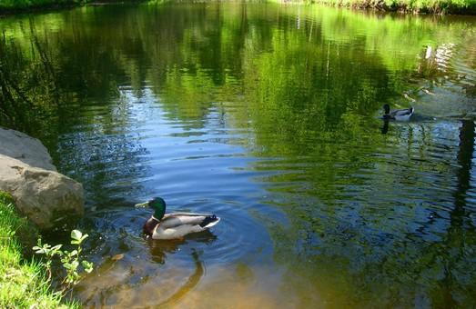 Львівська вода перевищує допустимі норми концентрацій