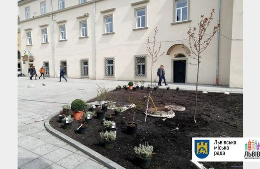 Як озеленили центр Львова до свят