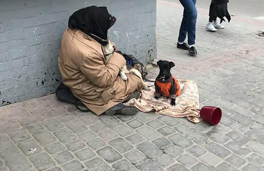 Очистити Львів від жебраків заради тварин