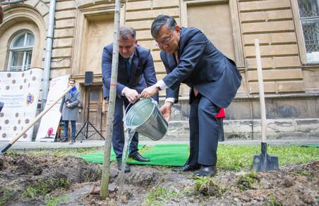 У самому центрі Львова замайоріли японські сакури (ФОТО)