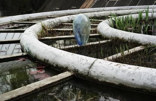 Творчі роботи студентів експонуватимуть у Ботанічному саду