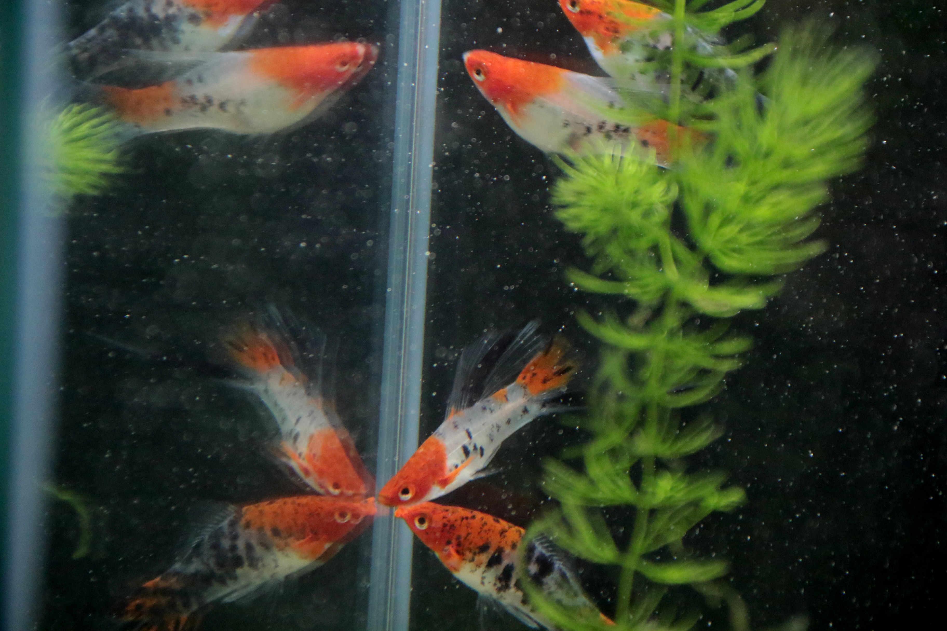 c181b06457c1fd ... У Львові стартувала перша загальноміська виставка акваріумних риб  (ФОТО) ...