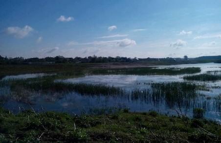 Як у Бродах відновлюється екосистема