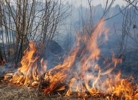 Цьогоріч на Львівщині за підпал сухої трави оштрафували 151 особу