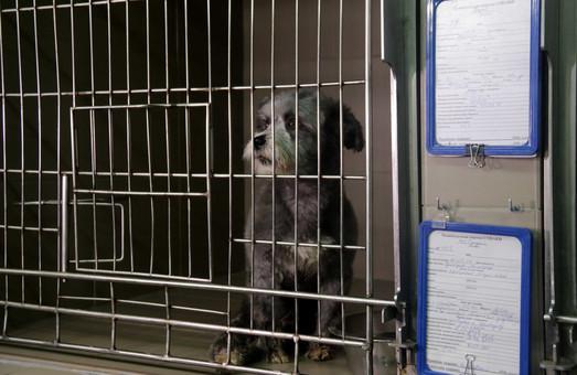 У Львові у 4 рази більше безпритульних тварин знайшли сім'ю