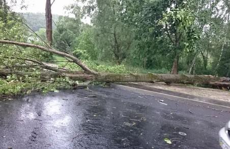 Негода знеструмила 160 населених пунктів на Львівщині