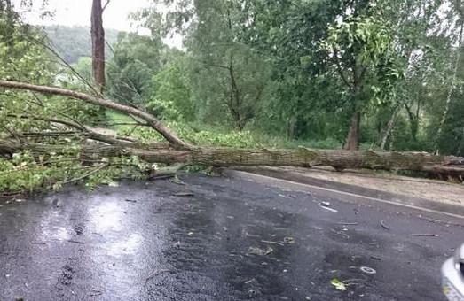 Негода завдала шкоди. 42 населених пункта залишилось без електрики
