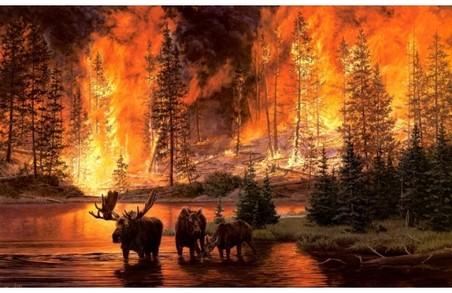 Мешканців Львівщини закликають берегти ліс від вогню