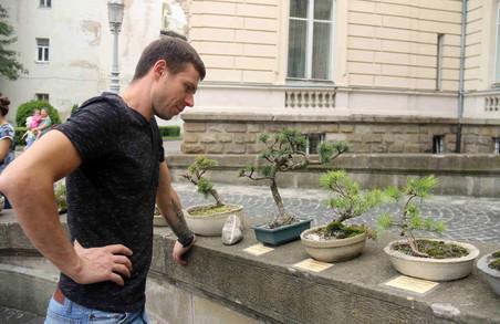У Львові сьогодні можна безкоштовно оглянути унікальну колекцію бонсай (ФОТО)