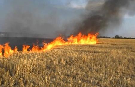 В Львівській області тривають жнива: не спалюйте стерні