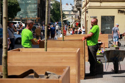 У центрі Львова стало красивіше: висадили декоративні дерева (ФОТО)