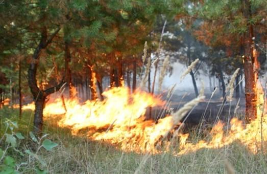 Львівщина через погоду та недбалість потерпає від пожеж в екосистемах