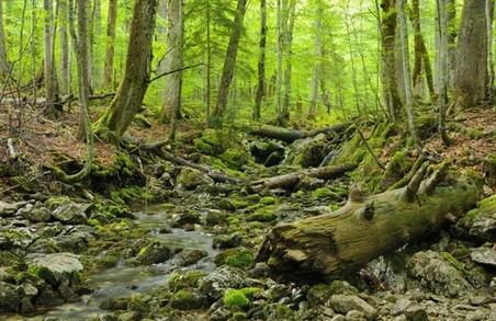 Українські ліси внесли до списку ЮНЕСКО