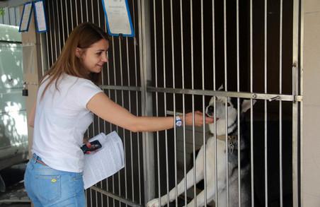 У Львові розповіли скільки насправді тут безпритульних собак (ФОТО)