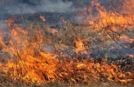 Внаслідок двохденної спеки згоріло 2500 кв м пшениці. Пустомитівщина