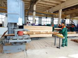 На Львівщині посилили потужності деревообробки
