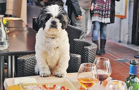 У Львові відкриють ресторан для собак