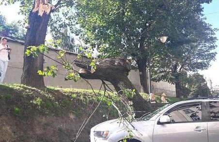 У центрі Львова дерево зруйнувало автомобіль нардепа Оксани Юринець
