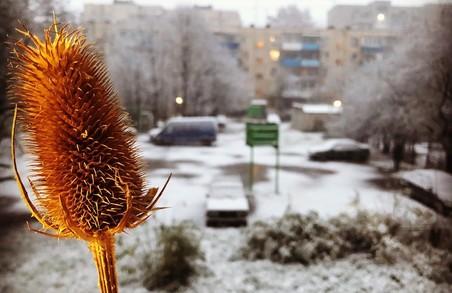 Перший сніг у Львові: фоторепортаж