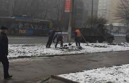 Випав сніг, вдарили морози – час саджати дерева, вважають у мерії