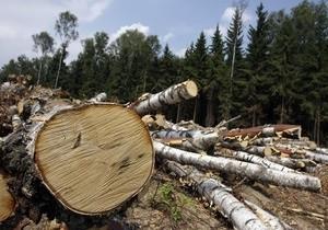 """Правоохоронці шукають зловмисників, які незаконно зрубали дерева у """"Діброві"""""""